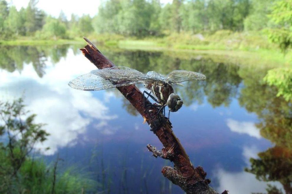 Wilderness Life: Naturerfahrungen (Bild)