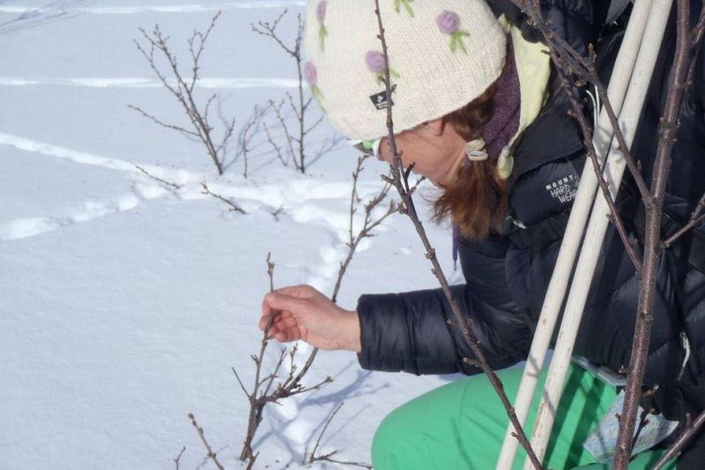 Oppdagelsesferder: Spurelesing i snøen – naturopplevelser (bilde)