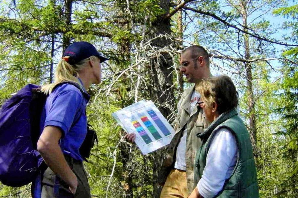Wildniskurs Braunbären: fachkundliche Führung bei Orsa, Schweden (Bild)