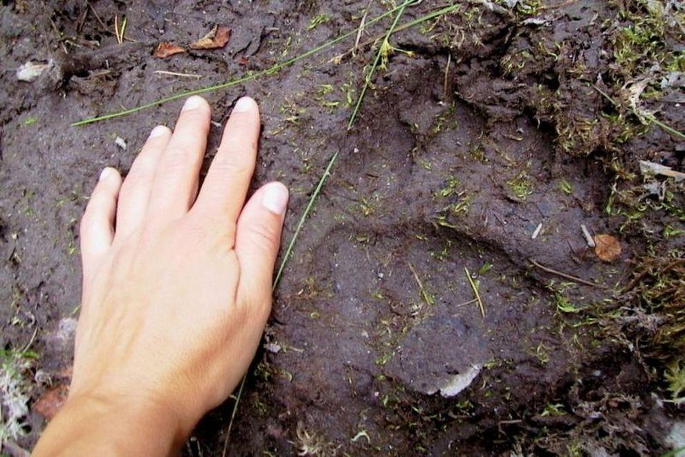 Bärencamp: Spurenlesen – Persönlichkeitsbildung (Bild)