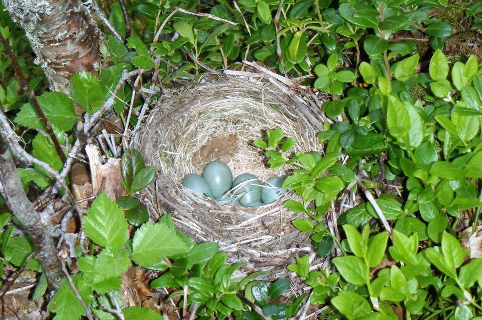 Naturopplevelse: fuglereir (bilde)