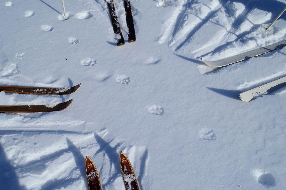 Nordic Winter Wilderness Camp: Tracking on Traditional Wooden Skis (picture) / Winter Wildnis Camp: Spurenlesen auf traditionellen Holzski (Bild)