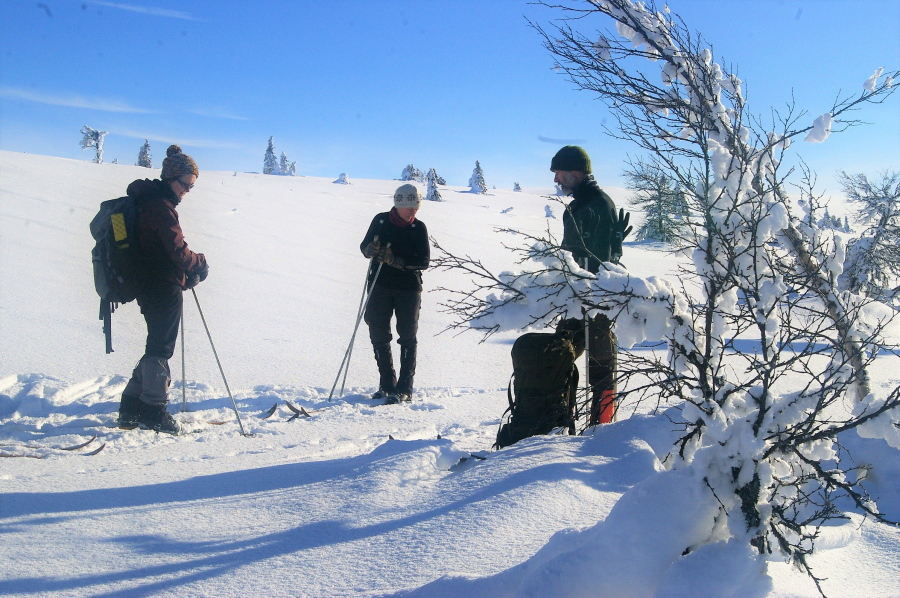 Winter in Norway: Skiing tours, ski trekking, winter camps (picture)